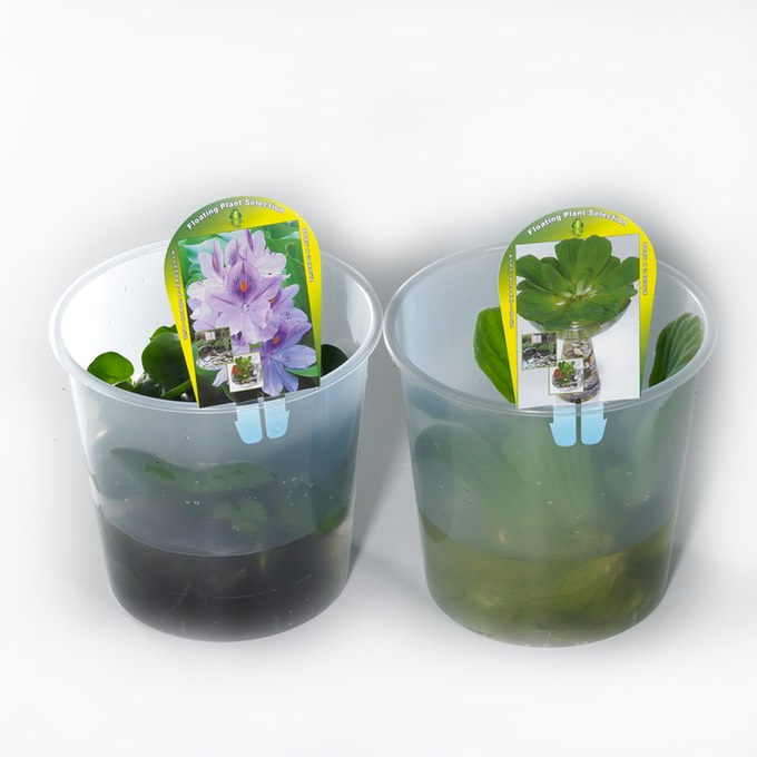 Jumbo Floating plants